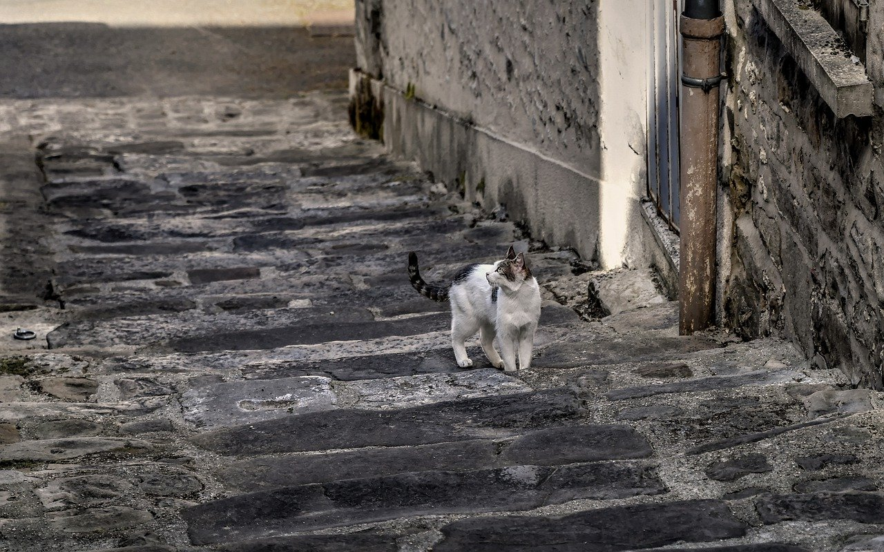 Cat Stray Cat Staircase Street Cat - christels / Pixabay