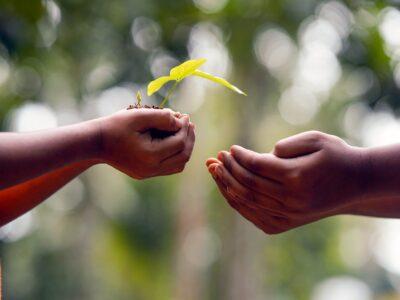Hands Soil Plant Environment  - shameersrk / Pixabay