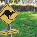 Kangaroo Shield Prohibitory Warning  - dlohner / Pixabay